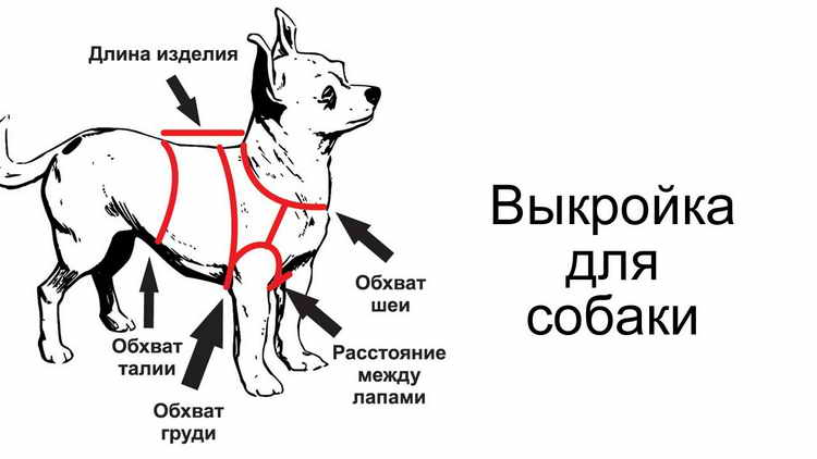 kak-sshit-odezhdu-dlya-sobak-2